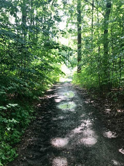 Online-Umfrage zum Heiligenstädter Stadtwald